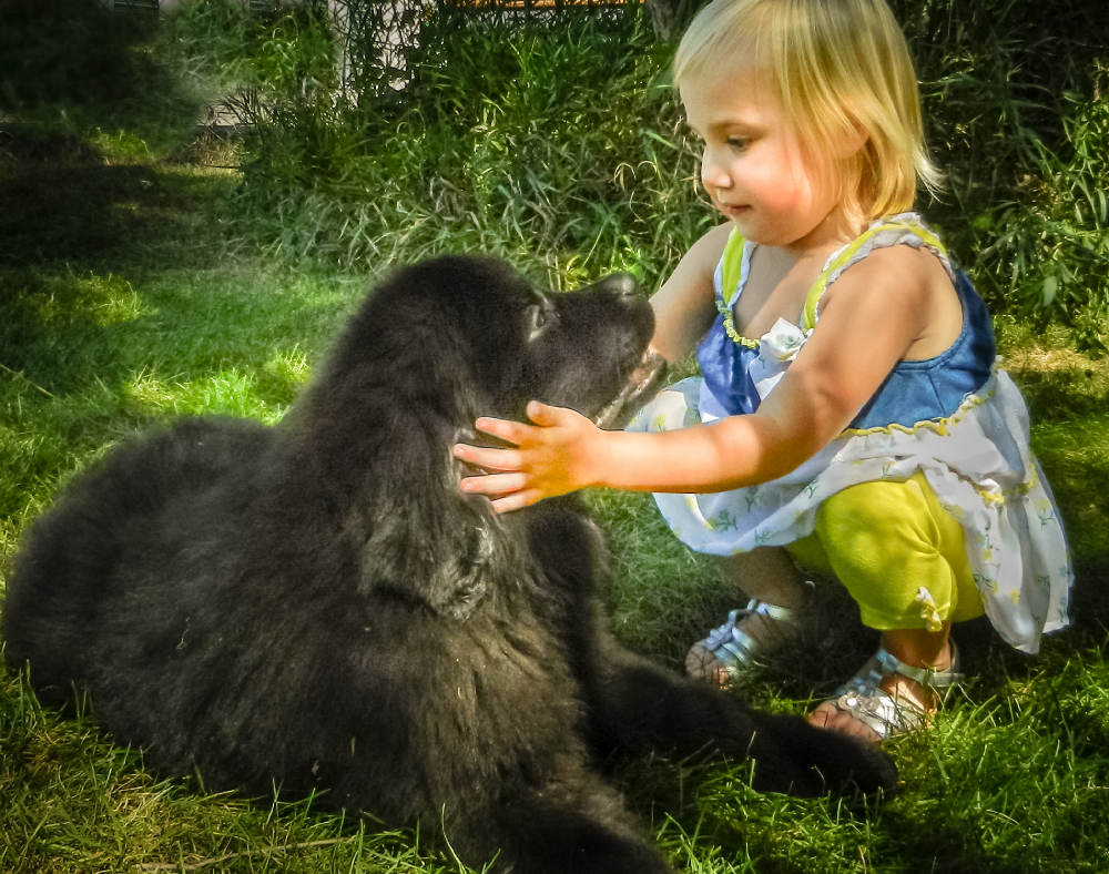 little girl and Newfoundland puppy sharing a special moment