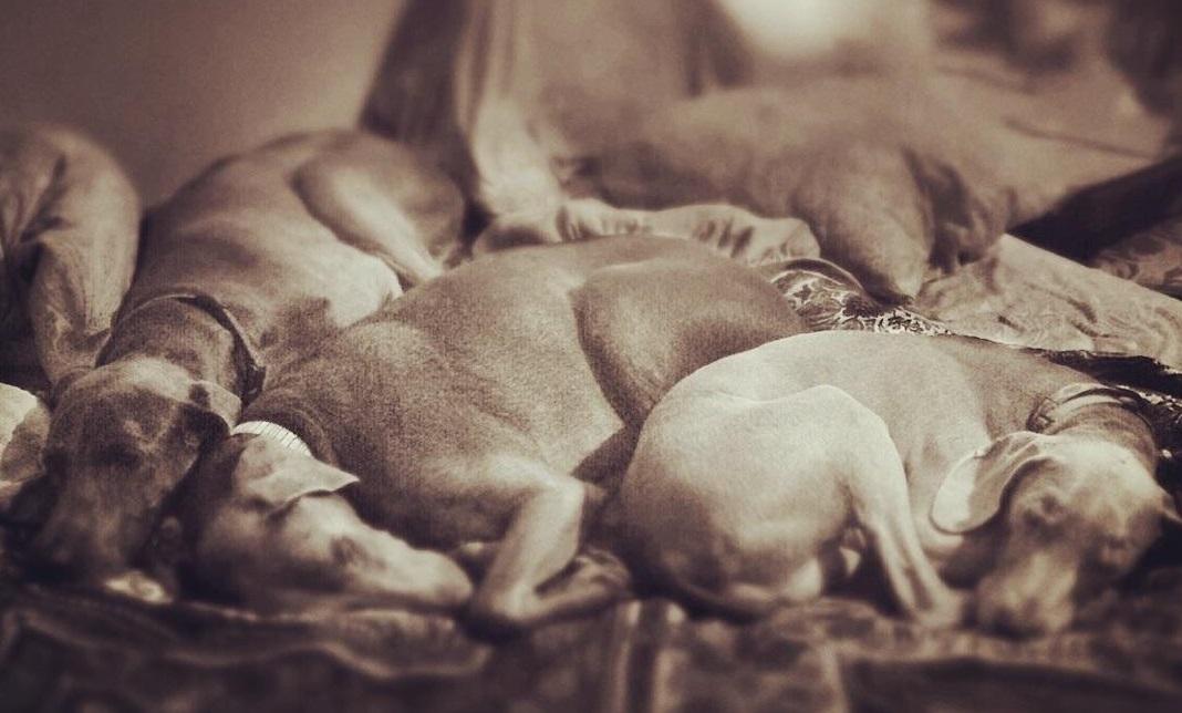 Katz 3 dogs snuggling