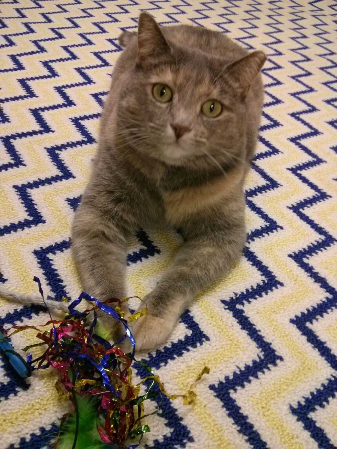 Myrna, one of our clinic cats, posing on the new rug